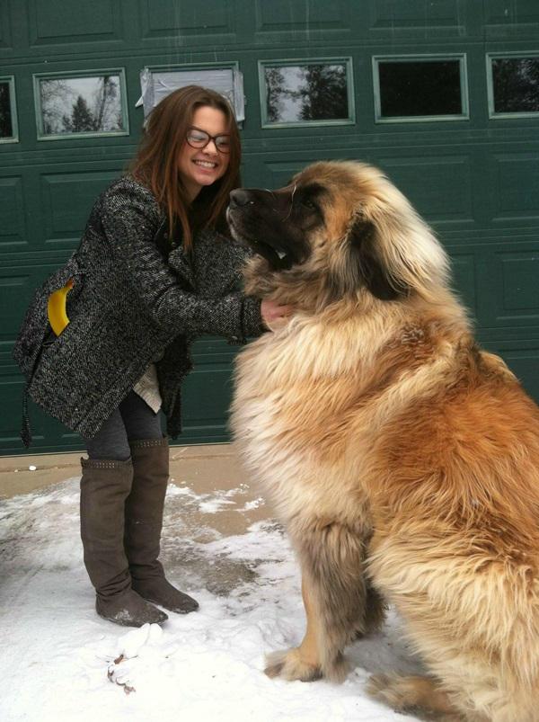15-Biggest-Dogs-in-the-World-7b