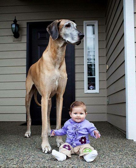 16-biggest-dogs-in-the-world