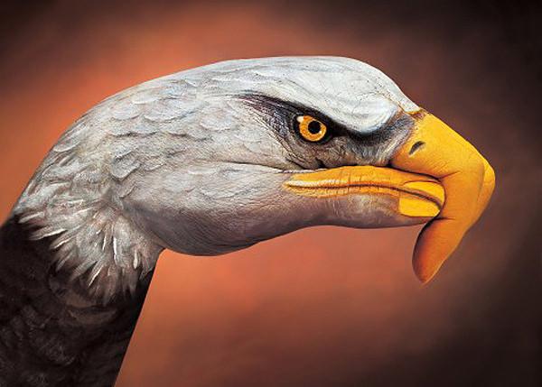 bald-eagle-on-brown