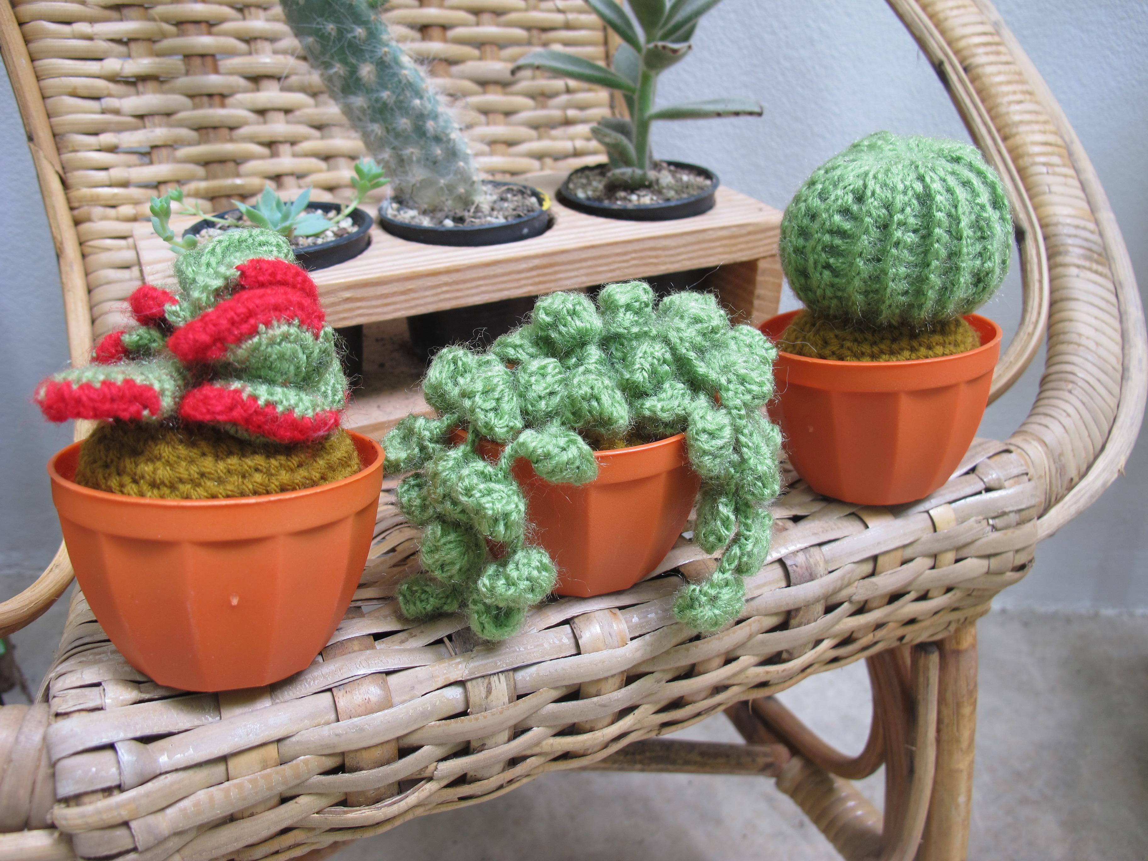 ตอกย้ำความเป็นติ่ง cactus lover fh_pานฝีมือสุดคิ้วท์