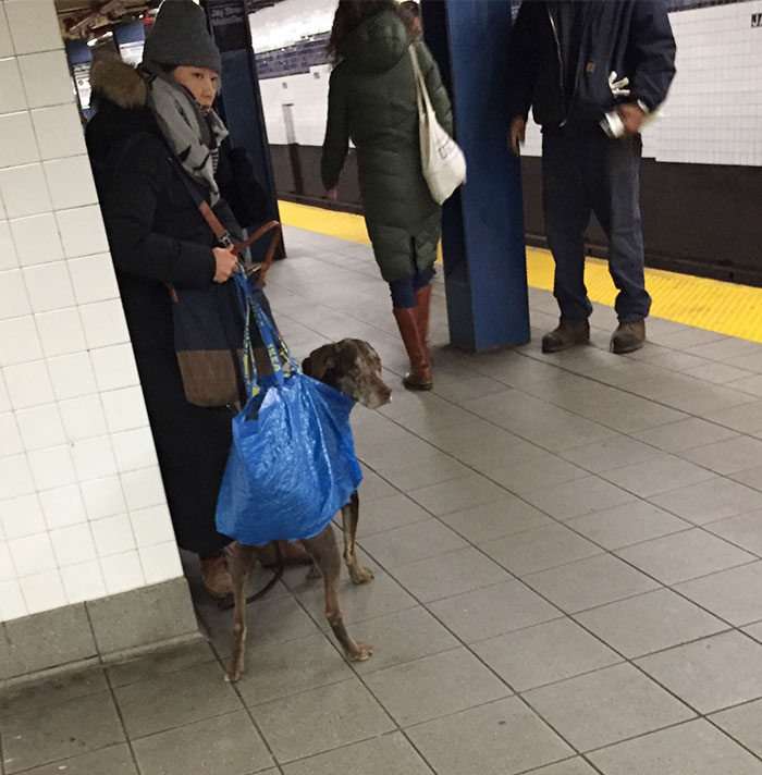 man-with-giant-dog-tote-bag-new-york-subway-60