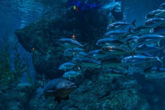 ซีไลฟ์ แบงคอก จัดโชว์ใต้น้ำ ดำดิ่งสู่อาณาจักรเงือก ร่วมปาร์ตี้วันเกิด 'ไทรทัน' เป็นของขวัญส่งท้ายปี