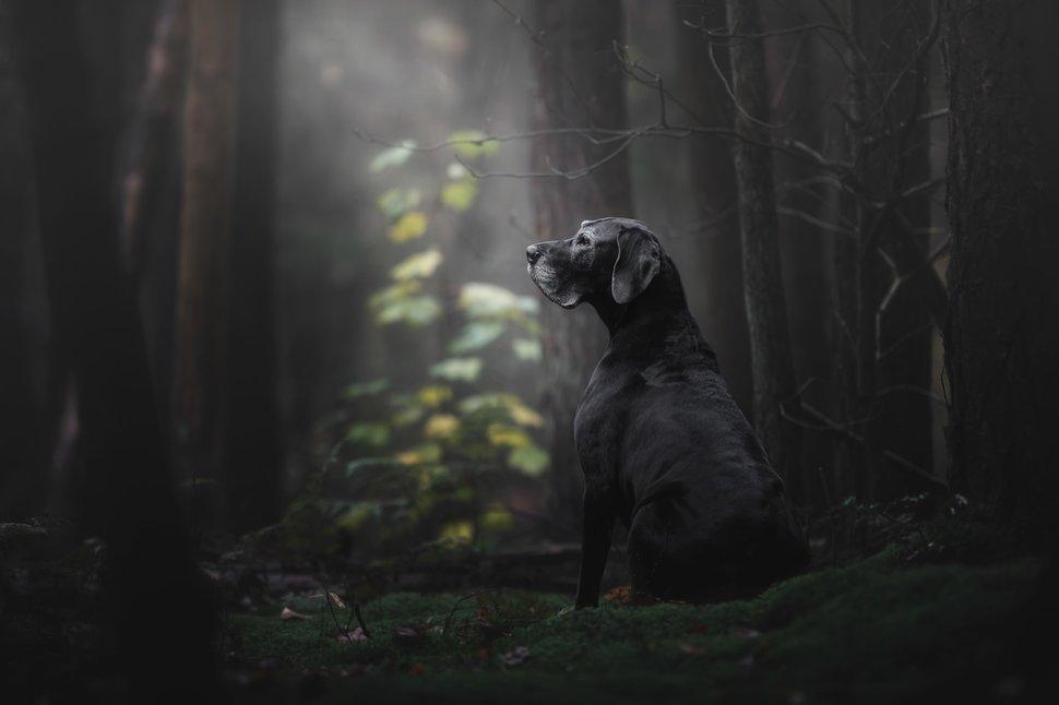 ภาพถ่ายสุนัข
