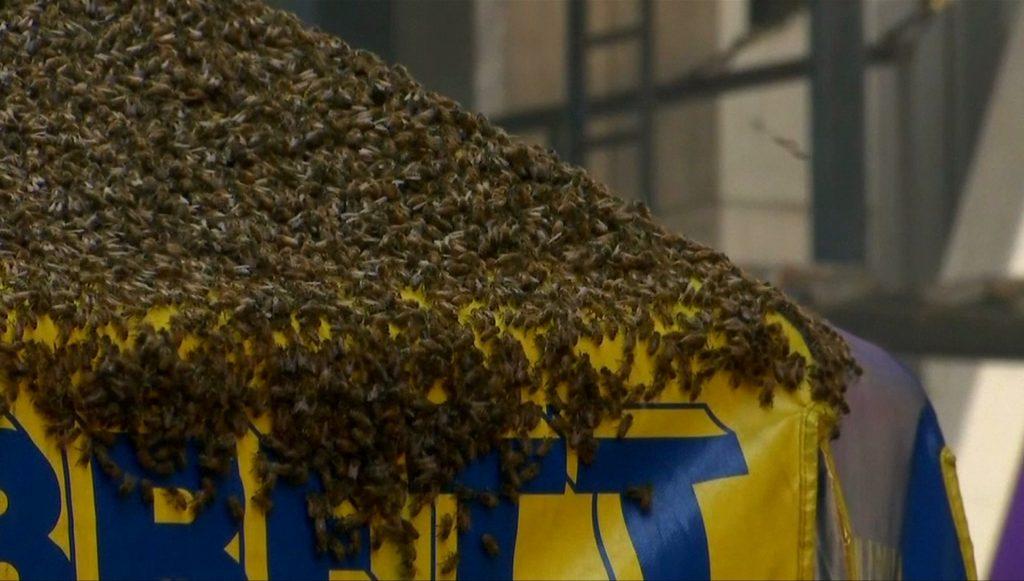 ฝูงผึ้ง