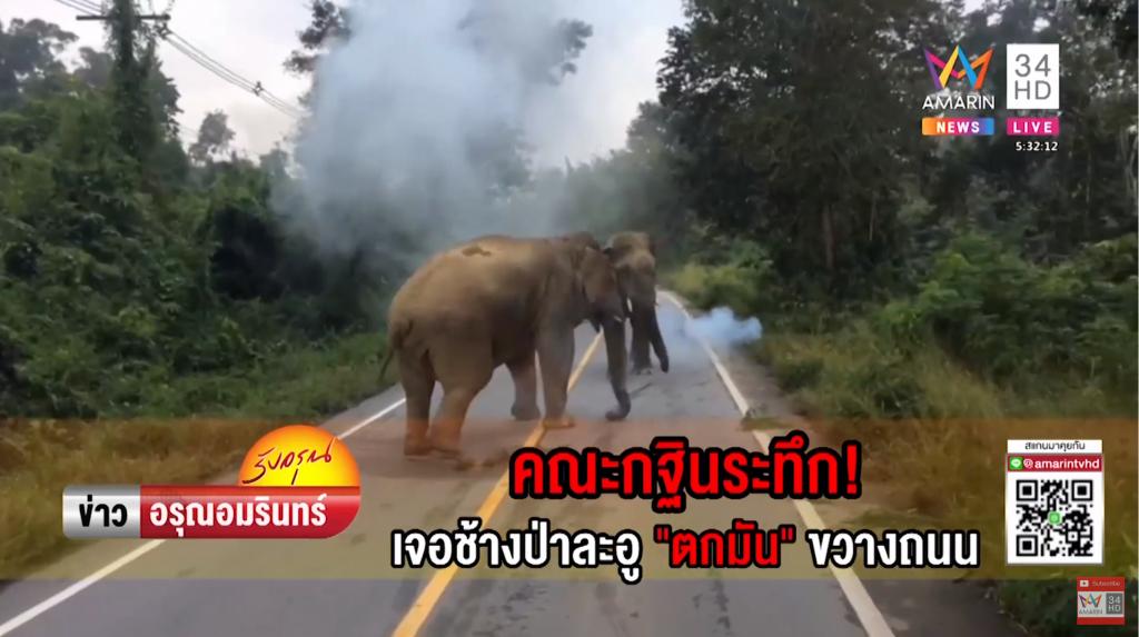 ช้างป่าตกมัน