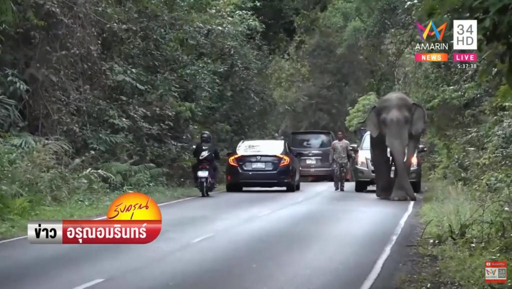 ช้างเขาใหญ่